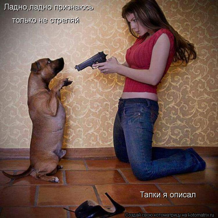 Котоматрица: Ладно,ладно признаюсь только не стреляй Тапки я описал