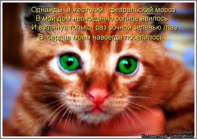 http://kotomatrix.ru/images/lolz/2012/06/11/cg.jpg