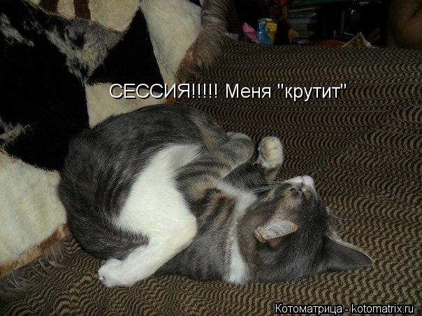 "Котоматрица: СЕССИЯ!!!!! Меня ""крутит"""