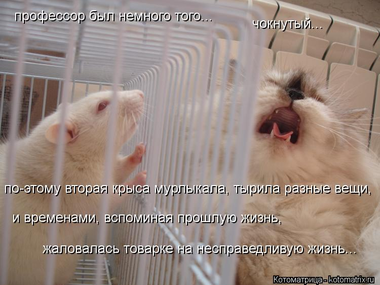 Котоматрица: профессор был немного того... чокнутый... по-этому вторая крыса мурлыкала, тырила разные вещи, и временами, вспоминая прошлую жизнь,  жаловала