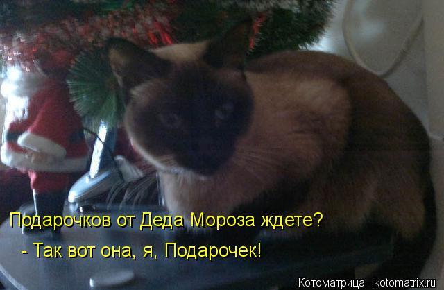 Котоматрица: Подарочков от Деда Мороза ждете? - Так вот она, я, Подарочек!