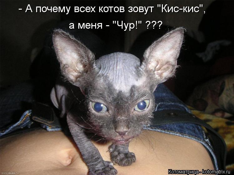 """Котоматрица: - А почему всех котов зовут """"Кис-кис"""", а меня - """"Чур!"""" ???"""