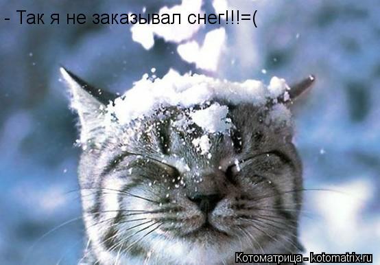 Котоматрица: - Так я не заказывал снег!!!=(