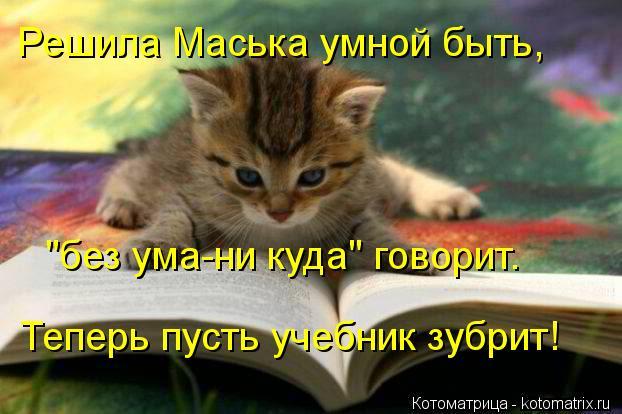 """Котоматрица: Решила Маська умной быть, """"без ума-ни куда"""" говорит. Теперь пусть учебник зубрит!"""