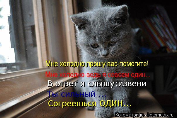 Котоматрица: Мне холодно,прошу вас-помогите! Мне холодно-ведь я совсем один... Ты сильный ... Согреешься ОДИН... В ответ я слышу:извени