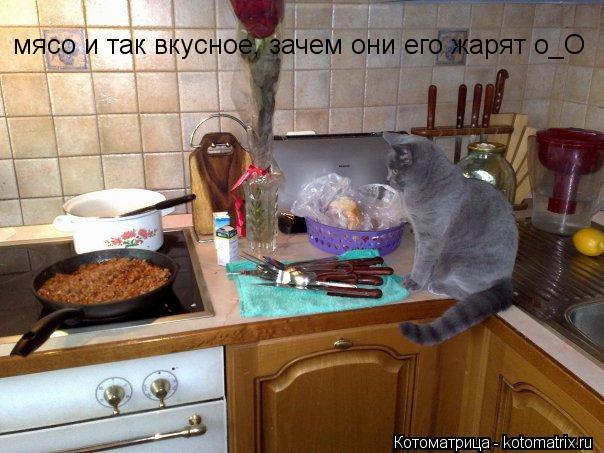 Котоматрица: мясо и так вкусное, зачем они его жарят о_О
