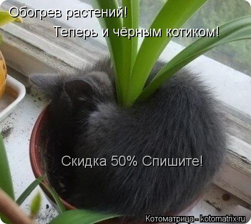 Котоматрица: Обогрев растений! Теперь и чёрным котиком! Скидка 50% Спишите!