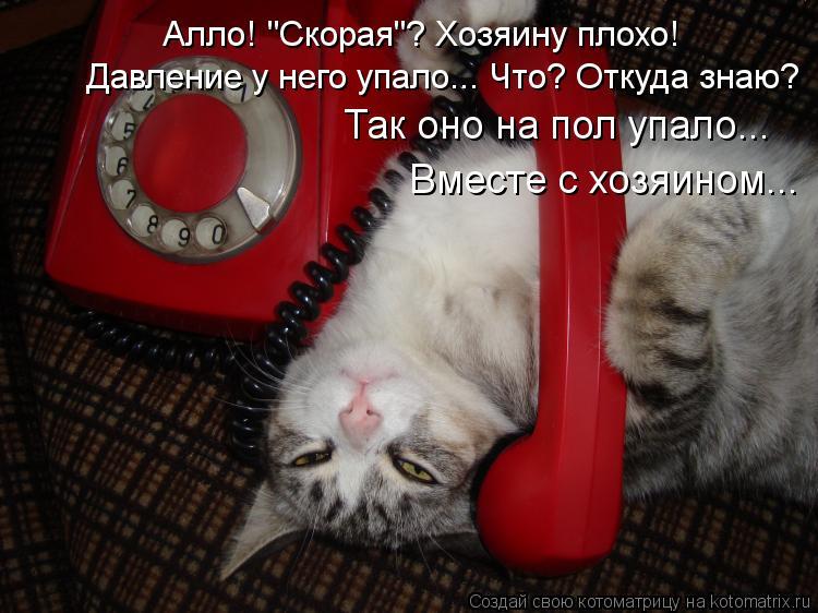 """Котоматрица: Алло! """"Скорая""""? Хозяину плохо! Давление у него упало... Что? Откуда знаю? Так оно на пол упало... Вместе с хозяином..."""