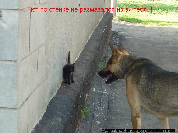 Котоматрица: чют по стенке не размазался из-зи тебя!!!