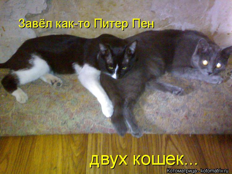 Котоматрица: Завёл как-то Питер Пен двух кошек...