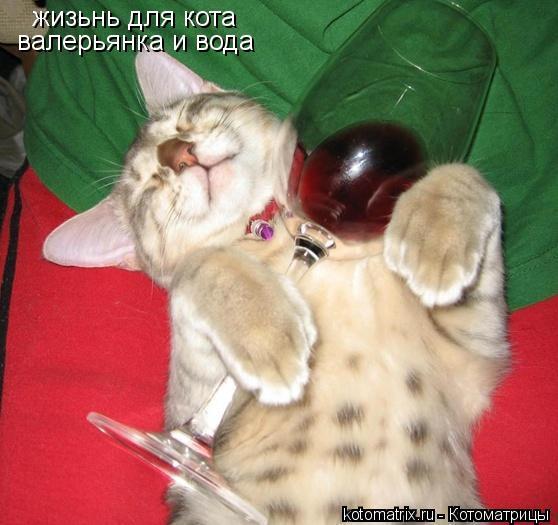 Котоматрица: жизьнь для кота  валерьянка и вода