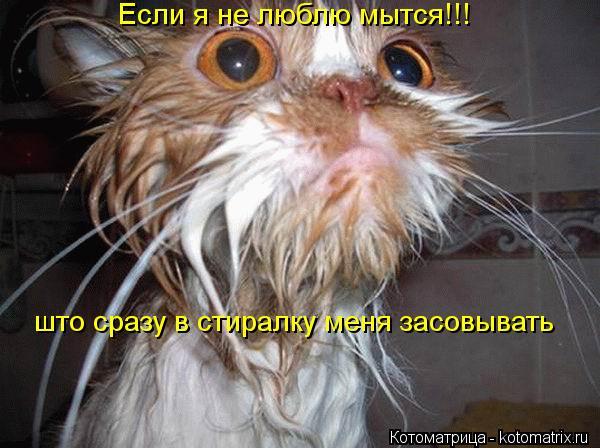 Котоматрица: Если я не люблю мытся!!! што сразу в стиралку меня засовывать