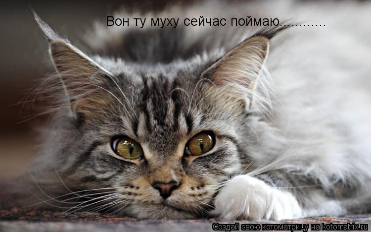 Котоматрица: Вон ту муху сейчас поймаю............
