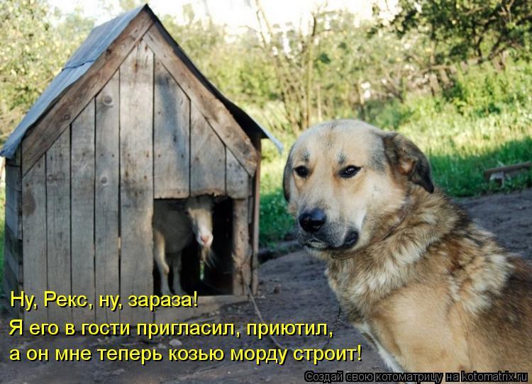 Котоматрица: Ну, Рекс, ну, зараза! Я его в гости пригласил, приютил,  а он мне теперь козью морду строит!