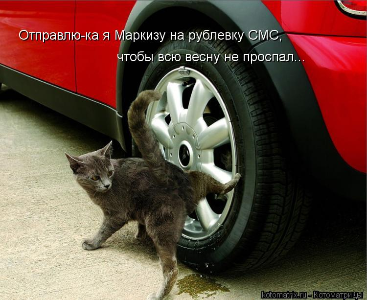 Котоматрица: Отправлю-ка я Маркизу на рублевку СМС,  чтобы всю весну не проспал...