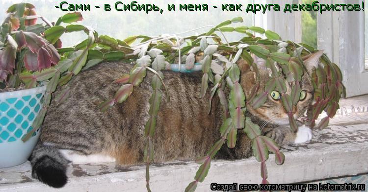 Котоматрица: -Сами - в Сибирь, и меня - как друга декабристов!
