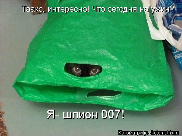 Котоматрица: Таакс, интересно! Что сегодня на ужин? Я- шпион 007!