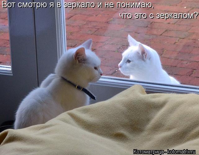 Котоматрица: Вот смотрю я в зеркало и не понимаю, что это с зеркалом?