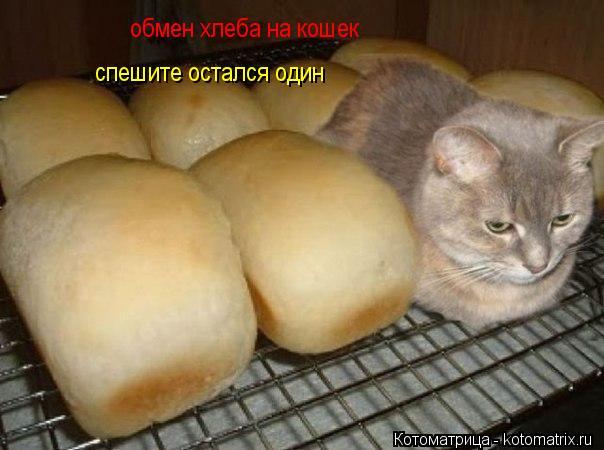 Котоматрица: обмен хлеба на кошек спешите остался один