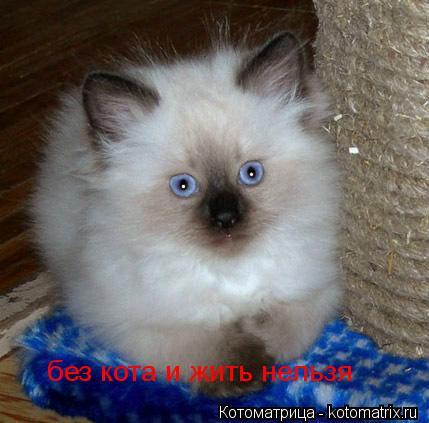 Котоматрица: без кота и жить нельзя без кота и жить нельзя