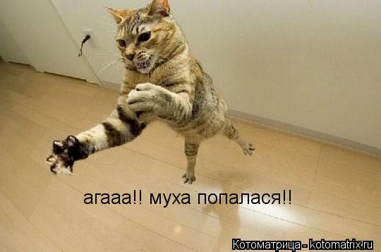 Котоматрица: агааа!! муха попалася!!