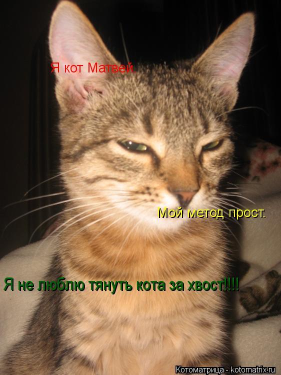 Котоматрица: Я кот Матвей. Мой метод прост. Я не люблю тянуть кота за хвост!!!!