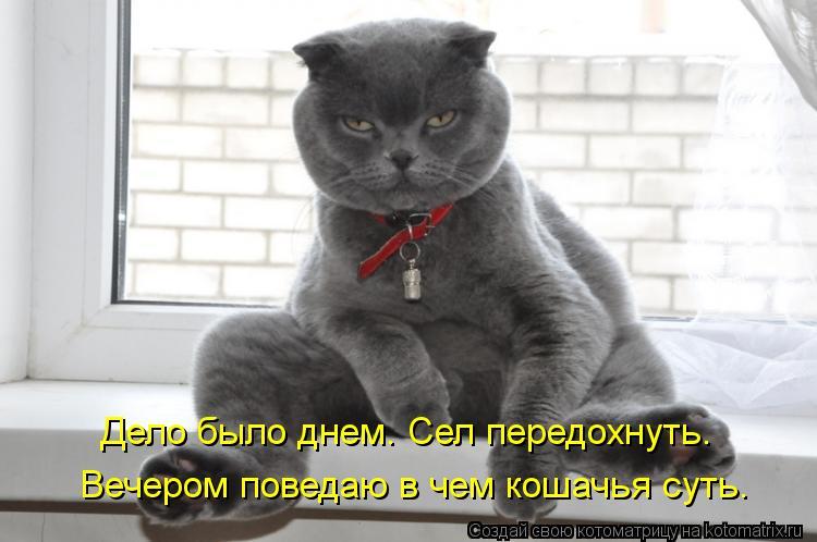 Котоматрица: Дело было днем. Сел передохнуть. Вечером поведаю в чем кошачья суть.