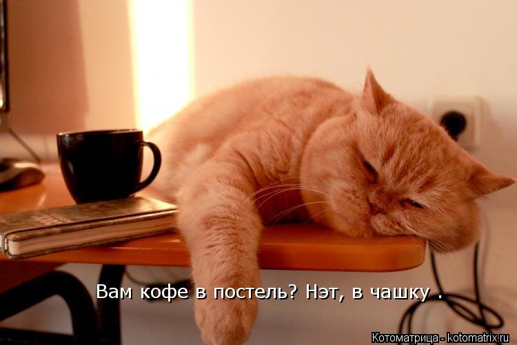 Котоматрица: Вам кофе в постель?  Вам кофе в постель? Нэт, в чашку .