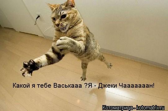 Котоматрица: Какой я тебе Васькааа ?Я - Джеки Чааааааан!