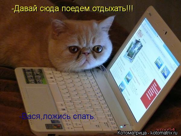 Котоматрица: -Давай сюда поедем отдыхать!!! -Вася,ложись спать.