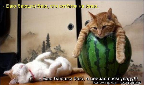 Котоматрица: - Баю-баюшки-баю, спи котёнок на краю. - Баю баюшки баю, я сейчас прям упаду!!!