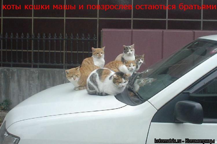 Котоматрица: коты кошки машы и повзрослев остаються братьями