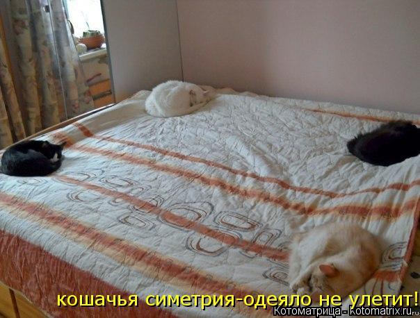 Котоматрица: кошачья симетрия-одеяло не улетит!