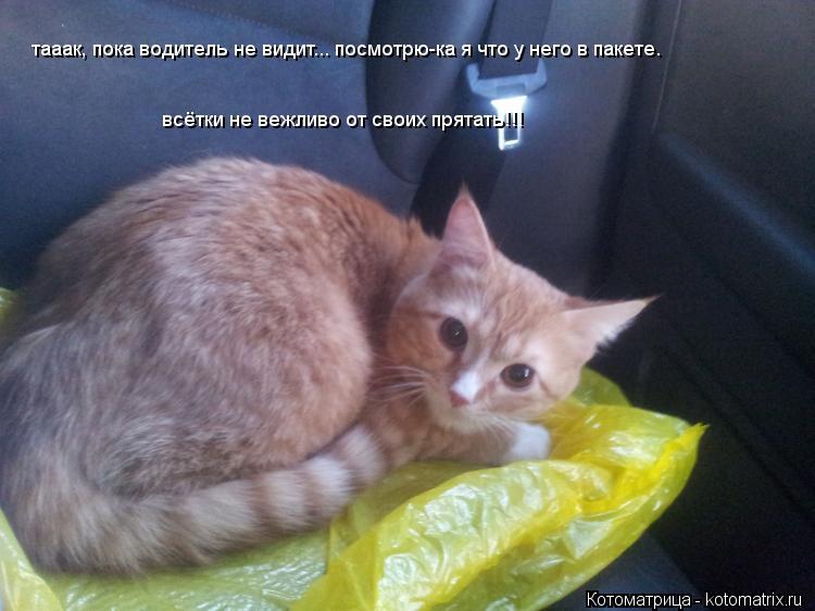 Котоматрица: тааак, пока водитель не видит... посмотрю-ка я что у него в пакете.                               всётки не вежливо от своих прятать!!!