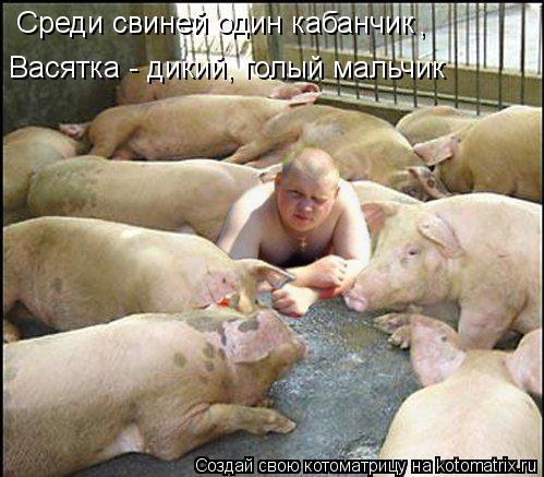 Котоматрица: Среди свиней один кабанчик  ,  Васятка - дикий, голый мальчик