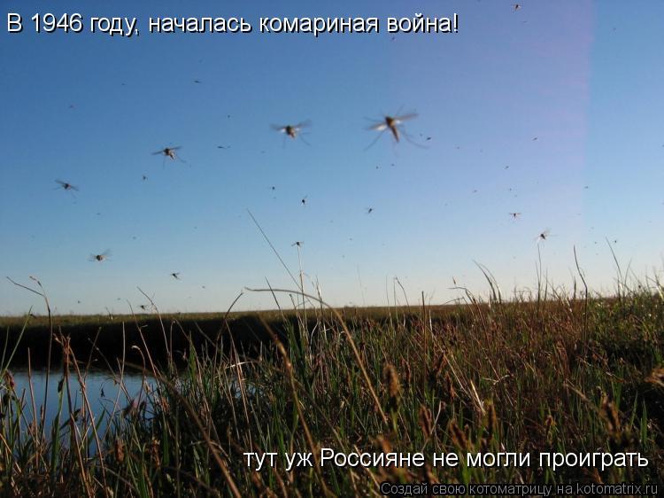 Котоматрица: В 1946 году, началась комариная война! тут уж Россияне не могли проиграть