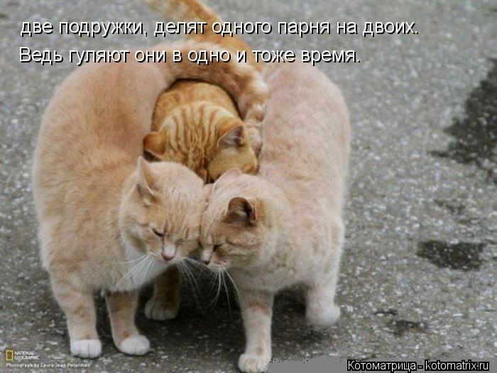Котоматрица: две подружки, делят одного парня на двоих.  две подружки, делят одного парня на двоих.  Ведь гуляют они в одно и тоже время.