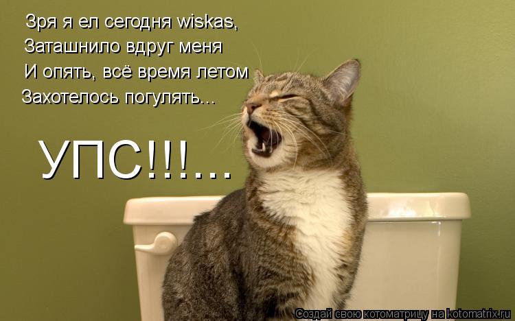 Котоматрица: Зря я ел сегодня wiskas, Заташнило вдруг меня И опять, всё время летом Захотелось погулять... УПС!!!...