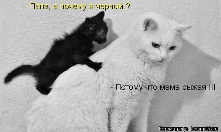 Котоматрица: - Папа, а почему я черный ? - Потому что мама рыжая !!!