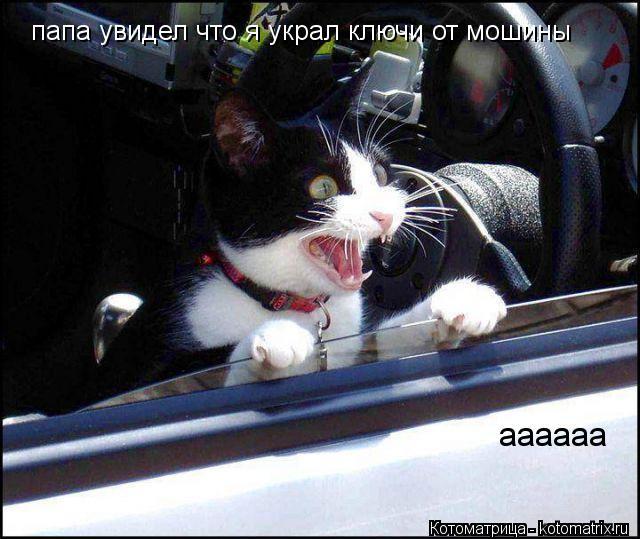Котоматрица: папа увидел что я украл ключи от мошины аааааа