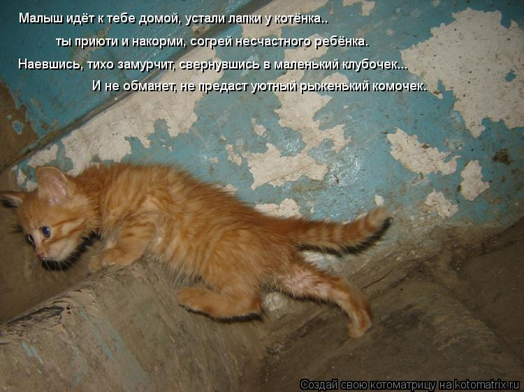 Котоматрица: Малыш идёт к тебе домой, устали лапки у котёнка.. ты приюти и накорми, согрей несчастного ребёнка. Наевшись, тихо замурчит, свернувшись в мал