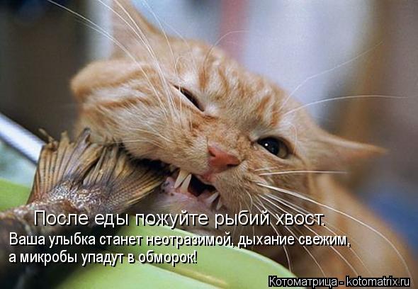 Котоматрица: После еды пожуйте рыбий хвост. Ваша улыбка станет неотразимой, дыхание свежим, а микробы упадут в обморок!