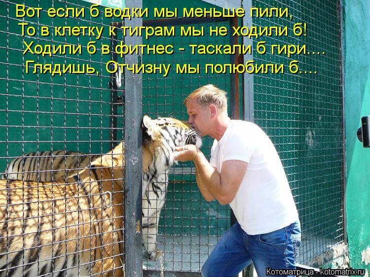 Котоматрица: Вот если б водки мы меньше пили, То в клетку к тиграм мы не ходили б! Ходили б в фитнес - таскали б гири.... Глядишь, Отчизну мы полюбили б....