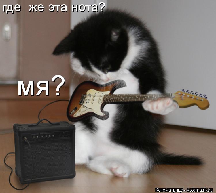 Котоматрица: где  же эта нота? мя?