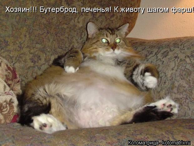Котоматрица: Хозяин!!! Бутерброд, печенья! К животу шагом фарш!