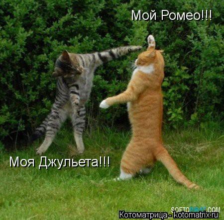Котоматрица: Мой Ромео!!! Моя Джульета!!!