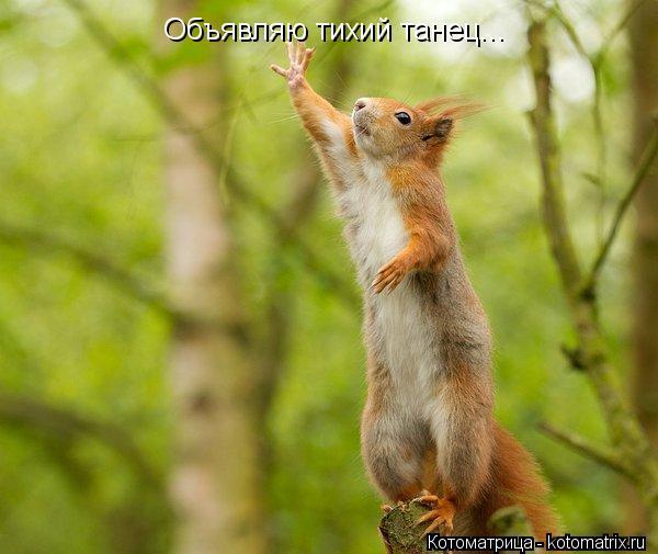 Котоматрица: Объявляю тихий танец...