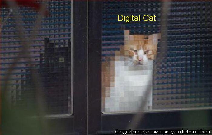 Котоматрица: Digital Cat