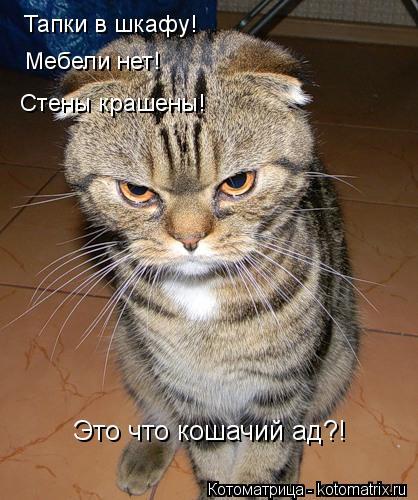 Котоматрица: Тапки в шкафу! Мебели нет! Стены крашены! Это что кошачий ад?!
