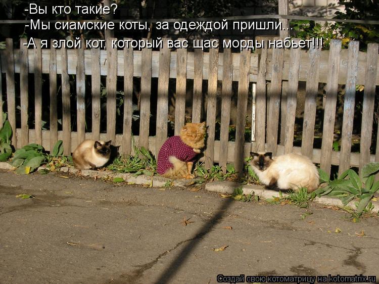 Котоматрица: -Вы кто такие? -Мы сиамские коты, за одеждой пришли... -А я злой кот, который вас щас морды набьет!!!